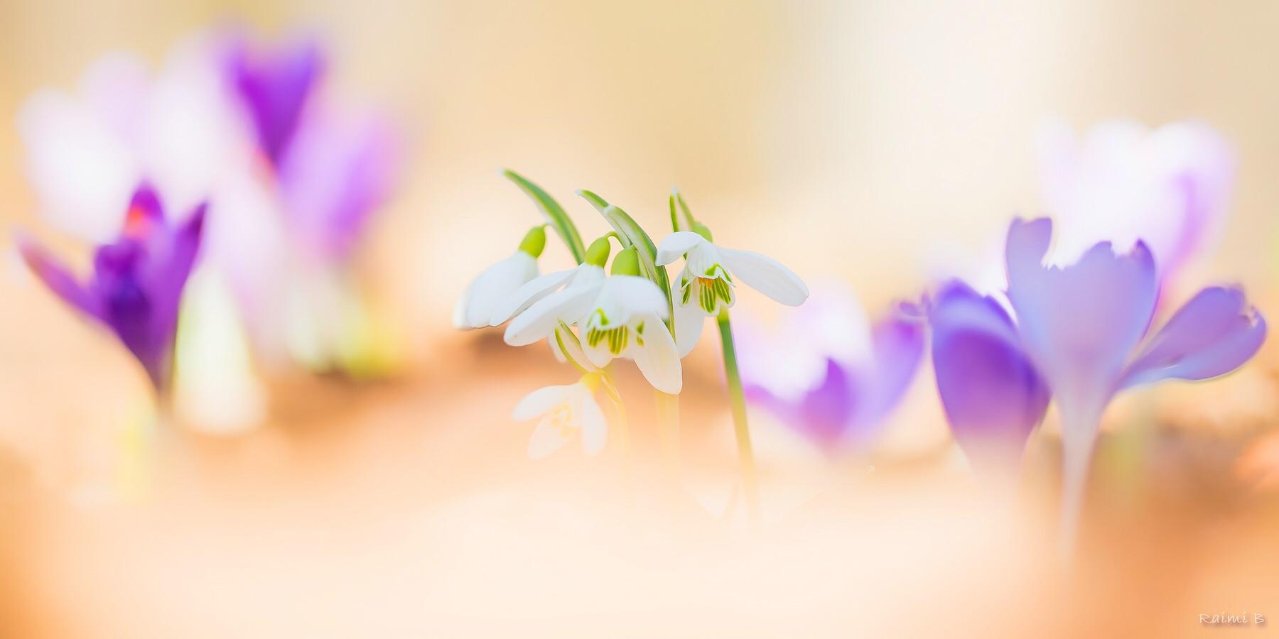 Frühling is...