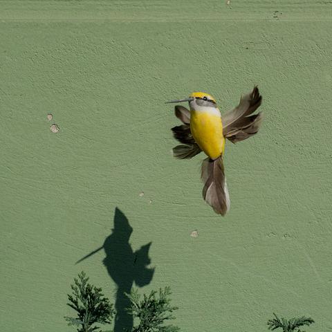 Mein erste Kolibri