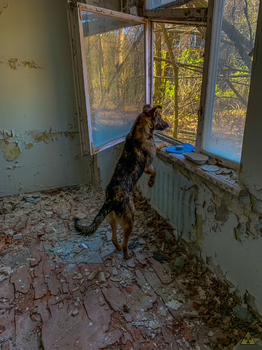 Dog Alpha