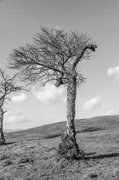 Baumformationen
