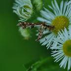 Fasching in Blumenbeet