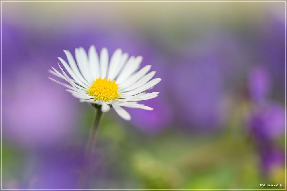 Frühlingsboten -4-