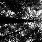 Wildnisgebiet Dürrenstein_Rothwald