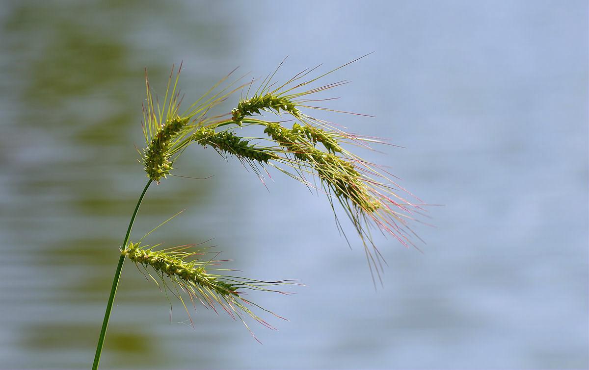 Einfach Grass