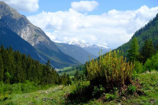Tirol (in der Nähe von Navis)