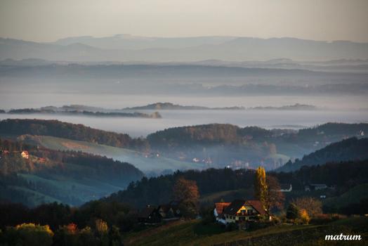 Morgenstimmung im Rebenland