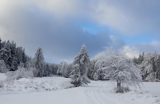 Winter im Waldviertel 5
