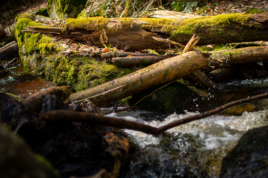 Totes Holz im Wasser