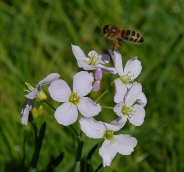 Fleißige Biene 3