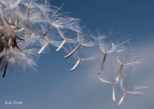 Wind macht eigene Bild