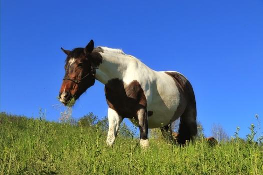 Mit dem Pferd spazieren gehen
