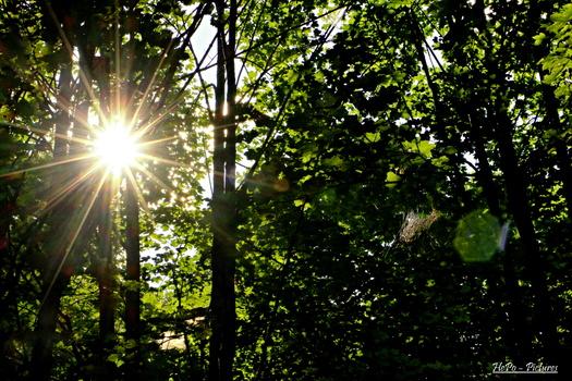 Sonne durch den Wald