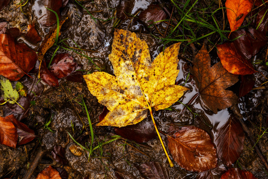 Bunte Blätter fallen ...