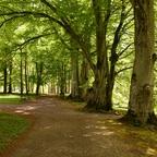 Ruhe im Laubwald