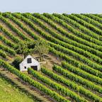 Mitten im Weingarten 2
