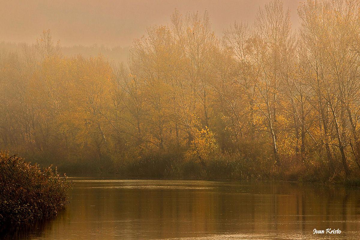 Durch den Nebel kommt die Sonne