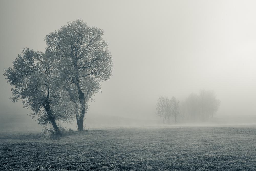Immer Nebel