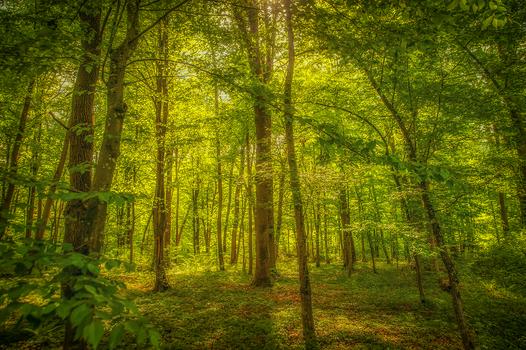 I glaub i steh' im Wald