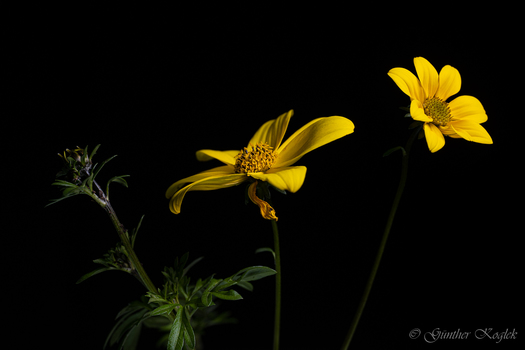 Yellow in the Dark