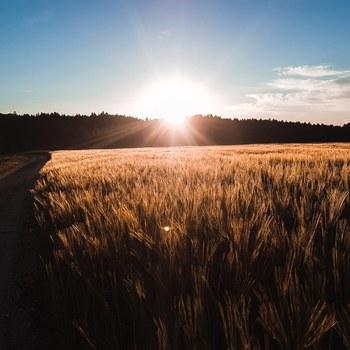 Sonnenaufgang bei der Pirsch