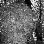Wald Aufpasser