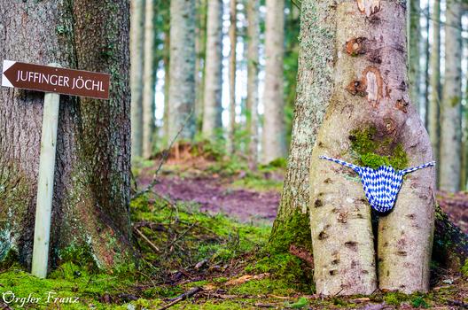Akt im Wald