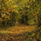 Herbstliche Teppich
