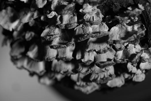 Schimmel-Pilze