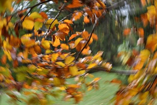 Alles dreht sich um den Herbst