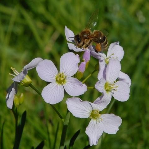 Fleißige Biene 2