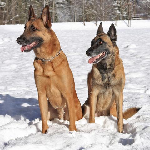 Falko und Bea