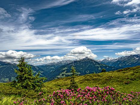 Alpenrosen Zillertal