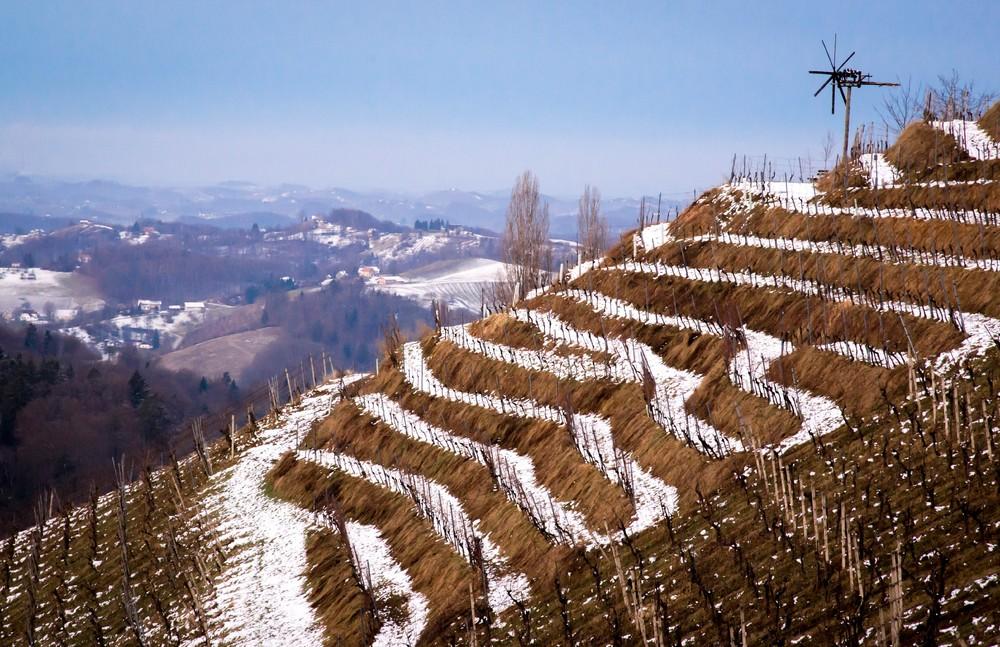 Terrassen Weingarten an der Südsteirischen Weinstrasse