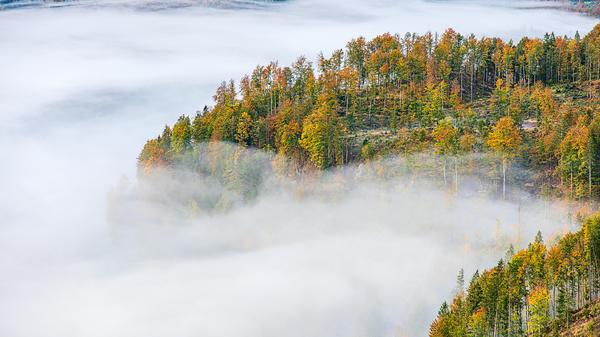 Almsee - Nebelsuppe