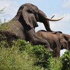 Zurück aus Tansania 1