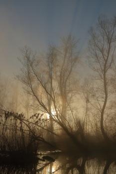 Sonne vs Nebel Nr.2