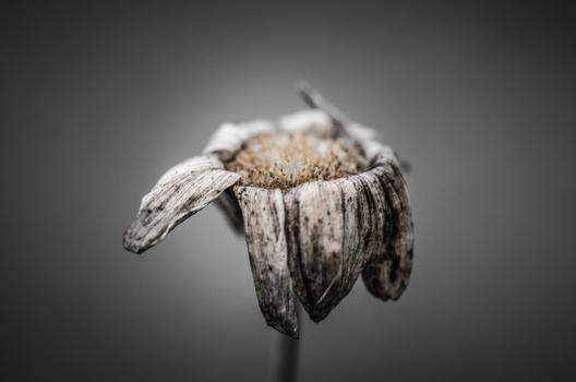 wo die blumen blühen, sterben sie auch