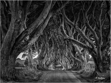 Ballymoney Dark Hedges