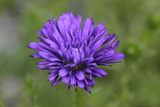 Violett!!
