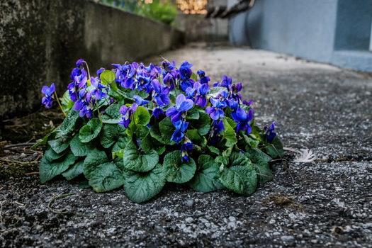 Blumen am Gang