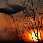 Sonne,Wind,Feder