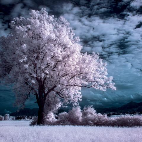 Infrarot Baum