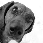 Fenris the dog part I (come closer)