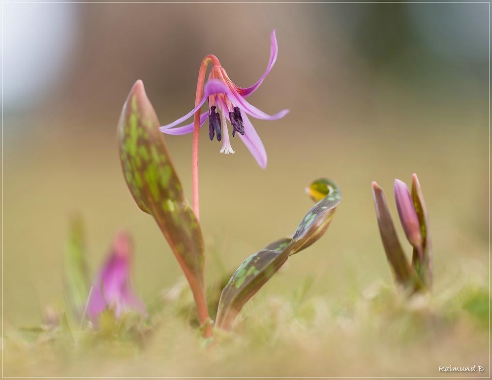 Frühlingsboten -3-