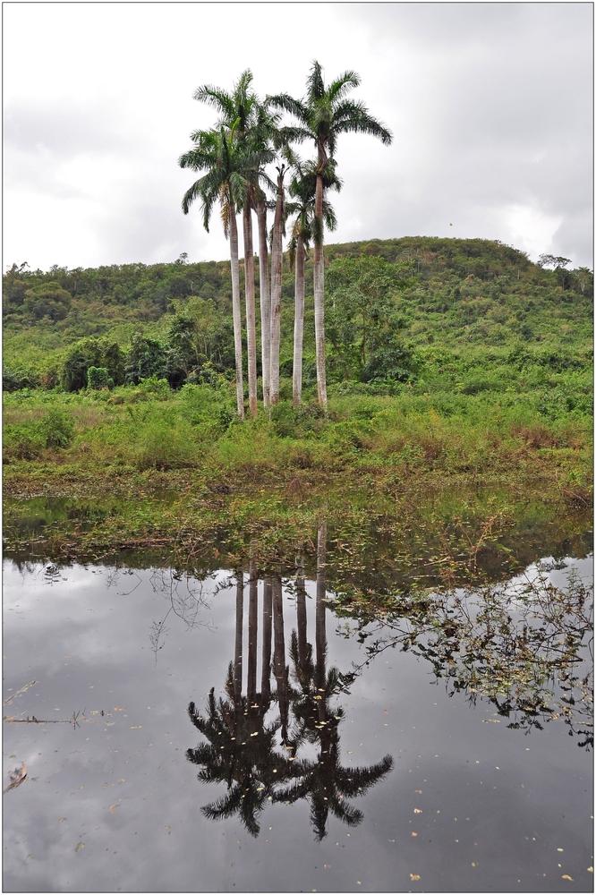 Kuba, Valle de los Ingenios, Palma Real