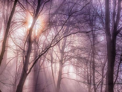 Sonnenstrahlen durchdringen den Nebel im Wald der Hagenbachklamm