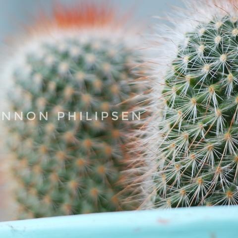 Wilder Kaktus