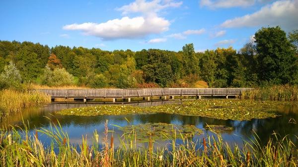 Teich in Herbststimmung