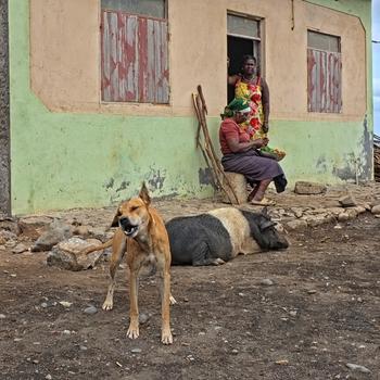 Angeknurrt,   in Santiago - Kap Verden