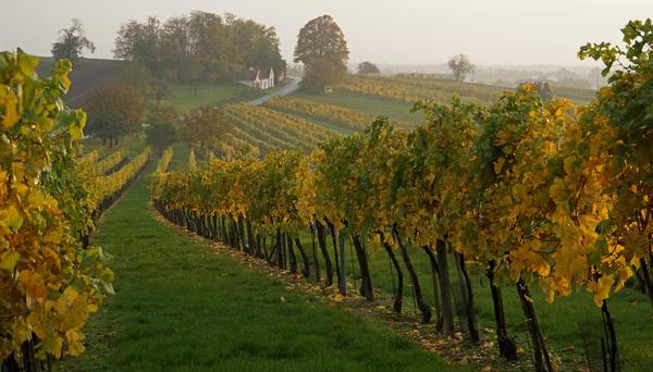 Herbst im Weinviertel 17.01